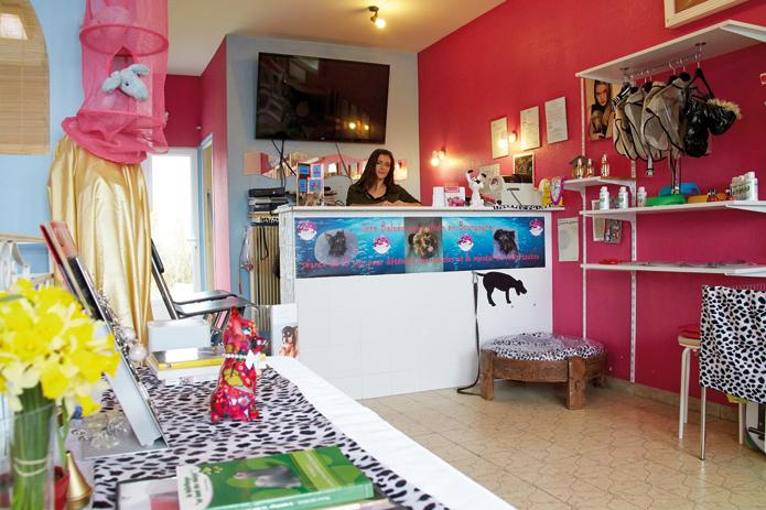 Abracadachien bing bang magazine - Ouvrir un salon de toilettage ...